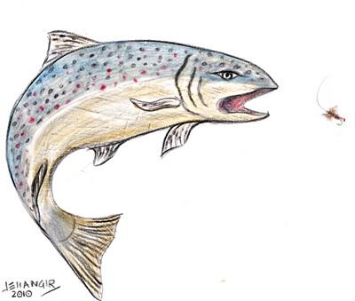 trout sketch